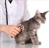 Ветеринарные клиники в Ряжске